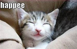 happy excited kitten Gallery