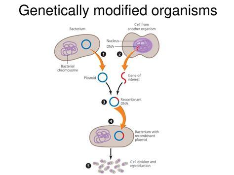 Modification Genetic Organisms by Genetic Engineering Genetic Engineering Presentation Ppt