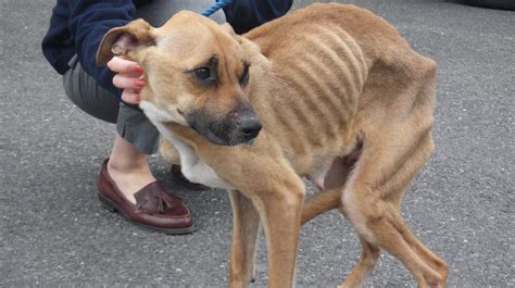 man banned  keeping animals  letting dog starve