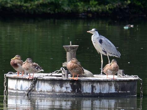 le bureau heron parc le parc du hé le des oiseaux