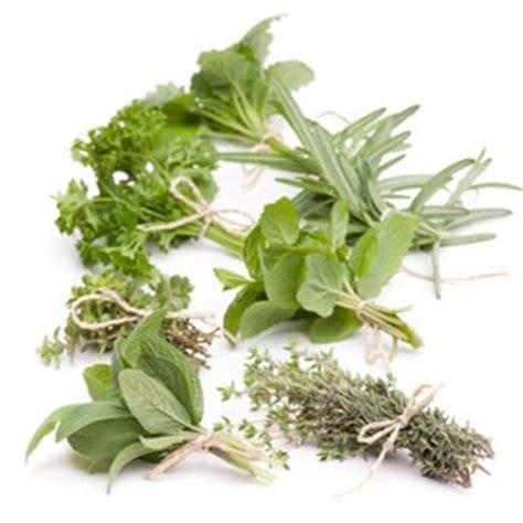 feuille de cuisine récolter et conserver les aromatiques
