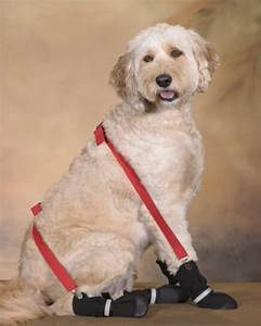 doggie suspenders keep dog boots and socks in placecanine With dog socks that stay on