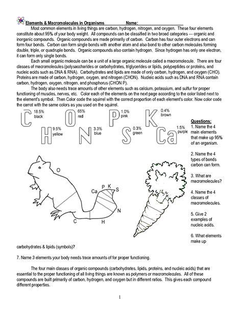 elements  macromolecules  organisms worksheet key