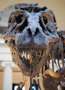 Sue Tyrannosaurus Rex Dinosaur