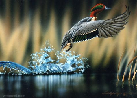best bird photography 11