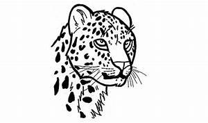 Dessin Jaguar Facile : comment dessiner un jaguar pas pas animaux youtube ~ Maxctalentgroup.com Avis de Voitures