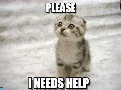 Meme Please - please sad cat meme on memegen