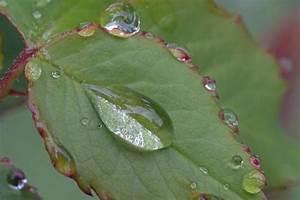 Pflanzen Im Mai : morgentau im mai tropfenlupe foto bild anf ngerecke nachgefragt nachgefragt pflanzen ~ Buech-reservation.com Haus und Dekorationen