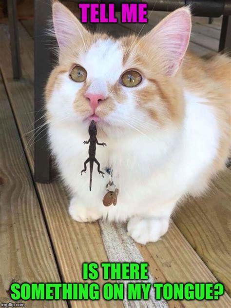lizard   tongue imgflip