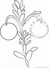Cranberry Dot Plant Worksheet Template Dots Connect Coloring Pages sketch template