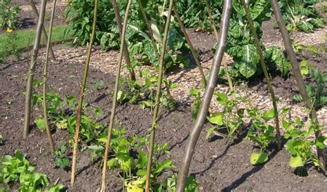 Garden Trellis  How To Make The Best Supports For