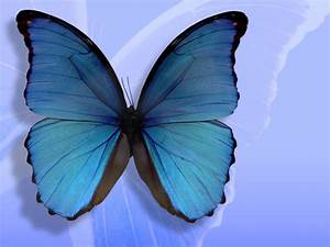 HD Butterfly Wallpapers For Desktop ~ High Definition ...