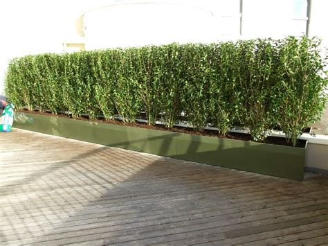 siepe per terrazzo instant hedge privacy screening roof top gardens