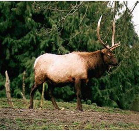 Fauna Of California California Coastal Region Animals