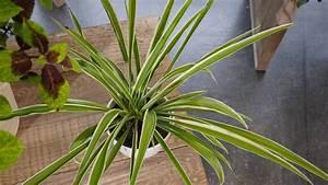 Zimmerpflanze Mit Roten Blättern : diese zimmerpflanzen versch nern den winter mdr de ~ Eleganceandgraceweddings.com Haus und Dekorationen