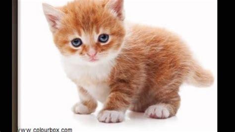 image chat mignon photos de chats trop mignons 3