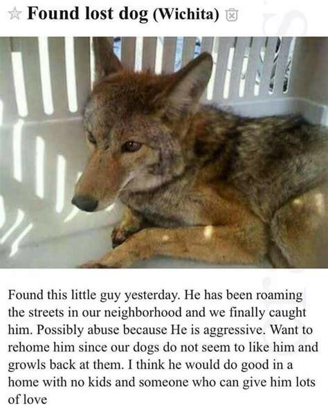 Lost Dog Meme - lost dog found acidrayn com