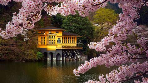 Spring flower tree beauty lake house landscape wallpaper ...