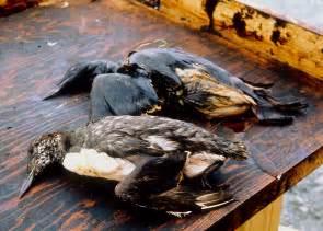 Pictures of Exxon Valdez Oil Spill
