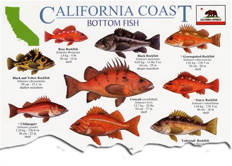 california coast pacific marine wildlife field guides