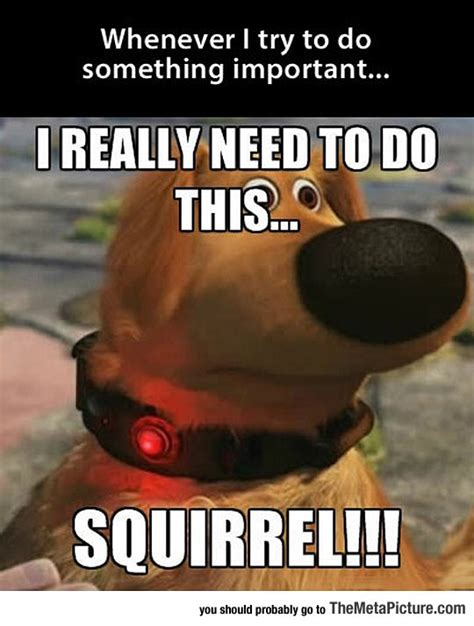 Squirrel Meme - i get easily distracted the meta picture