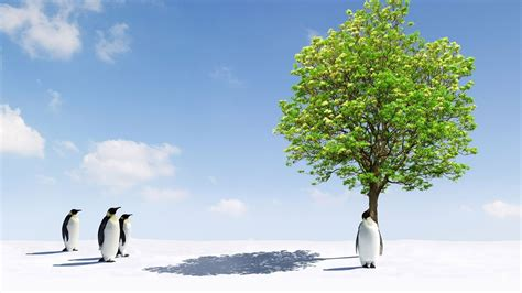 Hd Wallpapers Animals 1366x768 - landscapes trees birds penguins 1366x768 wallpaper