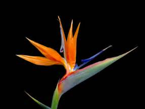 bouquet delivery bird of paradise flower weneedfun