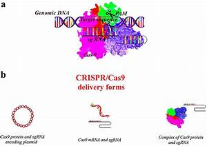 A  General Mechanism Of Crispr