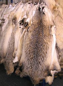 fur simple english wiktionary