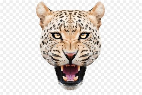 leopard tiger png    transparent