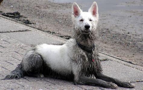 fuetterungsprobleme hunde tierernaehrung