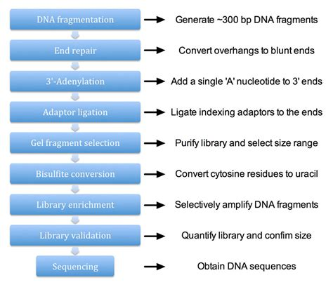 Library Construction for Genome-wide Bisulfite Sequencing ...
