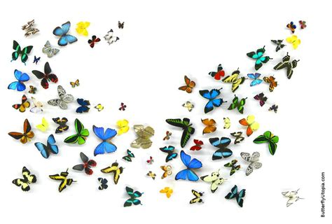 Free Animated Butterfly Wallpaper - free animated butterflies desktop wallpaper wallpapersafari