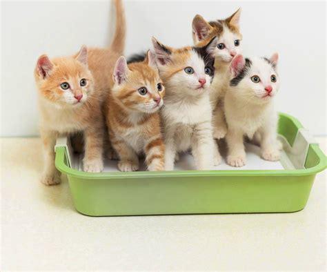 ist eine tierkrankenversicherung sinnvoll oder ueberfluessig