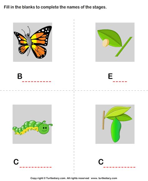 butterfly life cycle stages worksheet turtle diary