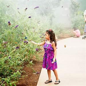 Butterfly Wonderland attraction - Scottsdale, AZ - Sunset