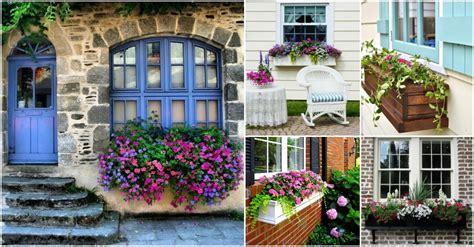 plants  wonderful spring window boxes