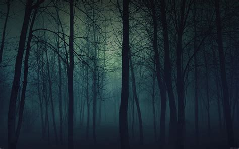 mb wallpaper foggy forest mountain papersco