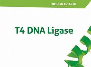 T4 Ligase En11  En11-050  En11-250