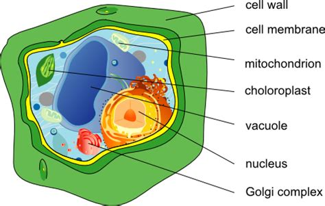 Plant Cell City