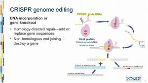 Ribonucleoprotein Delivery Of Crispr