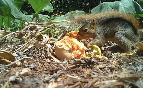 protect plants from squirrels how to protect garden from squirrels blog nurserylive com gardening in india