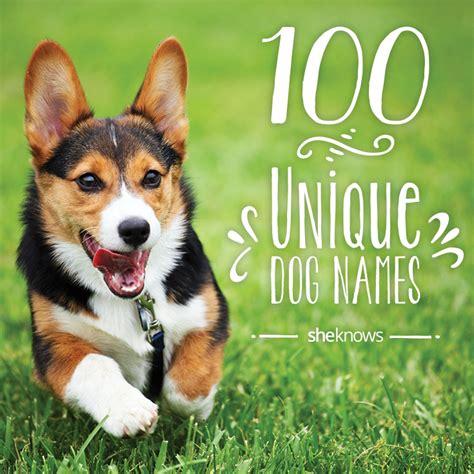 100 Unique Pet Names For Your New Dog