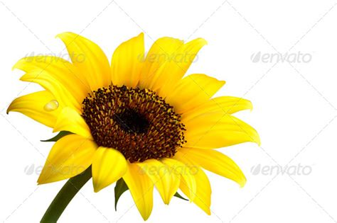 Background With Yellow Sunflower By Almoond Graphicriver Glitter Wallpaper Creepypasta Choose from Our Pictures  Collections Wallpapers [x-site.ml]