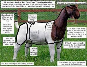 1000  Images About Goats On Pinterest