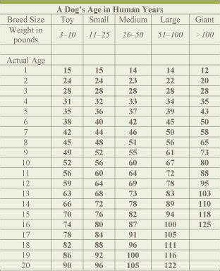 dog age chart   owen  human years  sounds