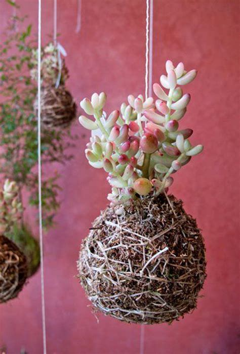 beautiful kokedama string garden ideas home design