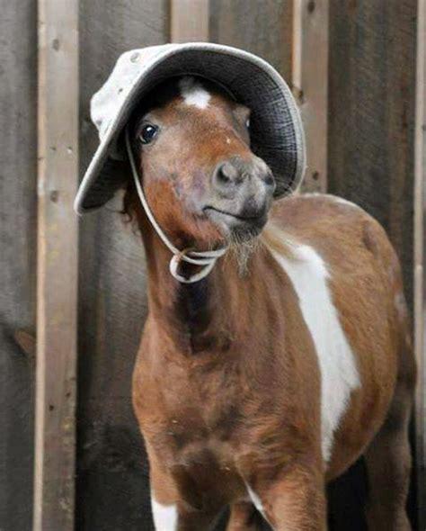 horse wearing hat cuteanimals horses