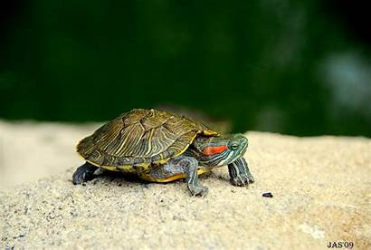 Turtle Backgrounds Wallpapers Widescreen