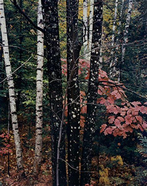 intimate landscapes eliot porter artists scheinbaum